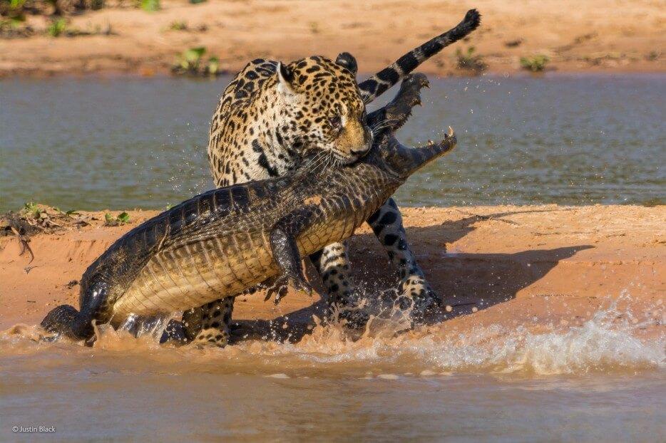 vie-sauvage-wildlife-2014-2