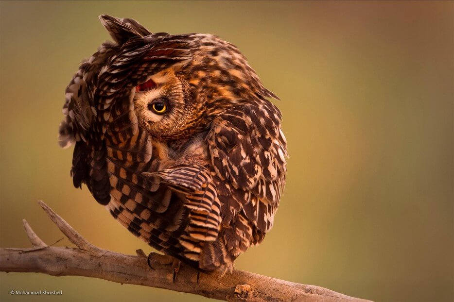 vie-sauvage-wildlife-2014-3