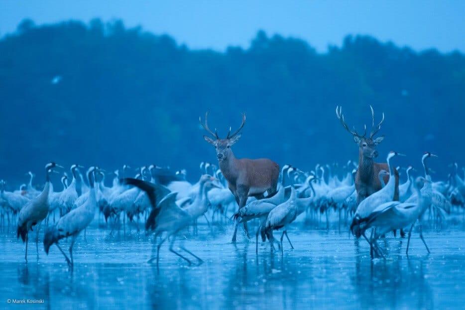 vie-sauvage-wildlife-2014-32
