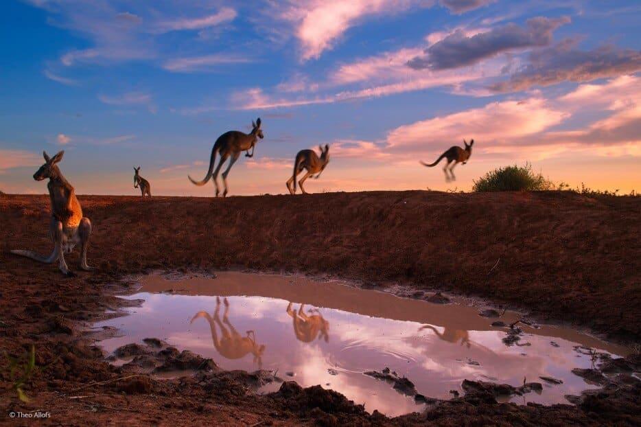 vie-sauvage-wildlife-2014-33