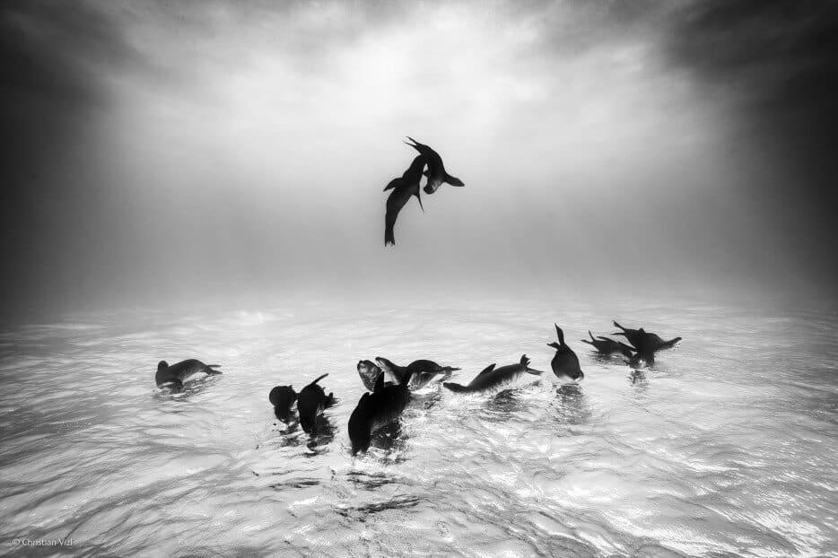 vie-sauvage-wildlife-2014-34