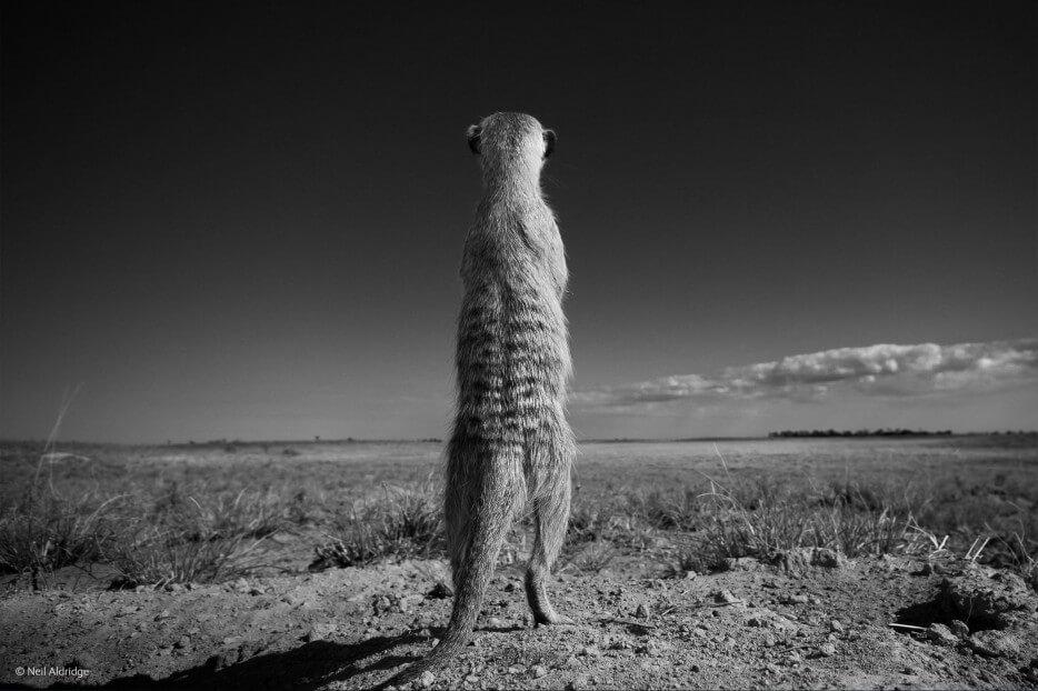 vie-sauvage-wildlife-2014-35