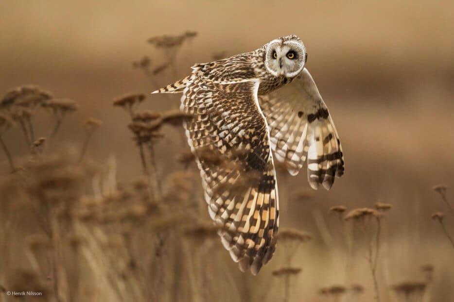 vie-sauvage-wildlife-2014-38