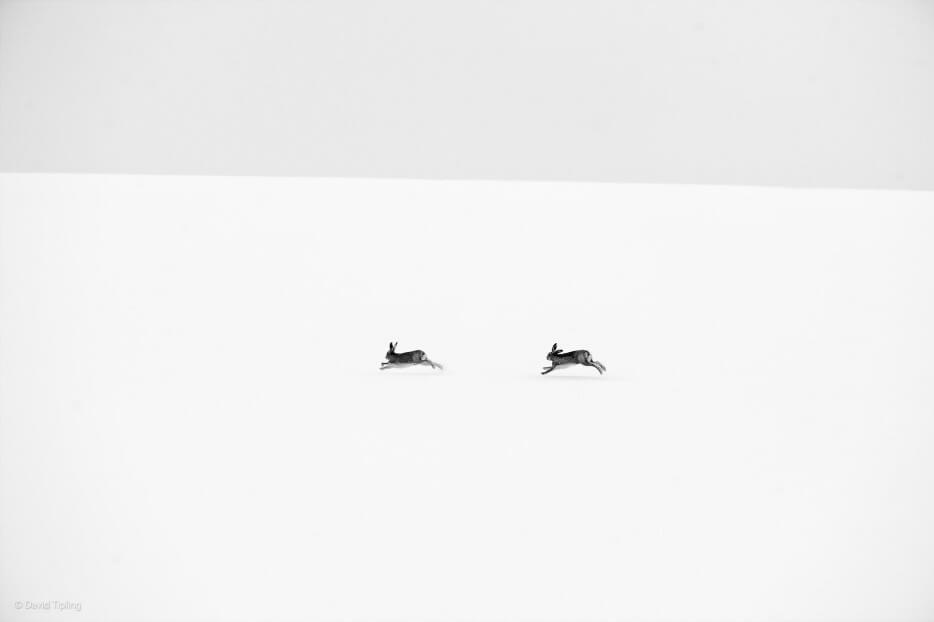 vie-sauvage-wildlife-2014-42