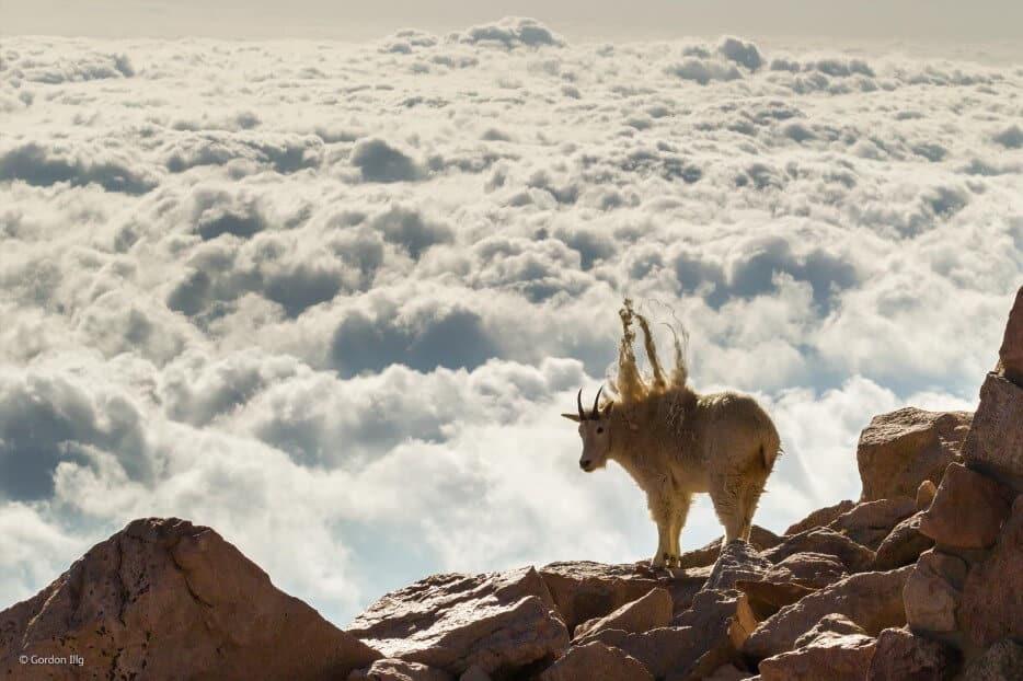 vie-sauvage-wildlife-2014-7