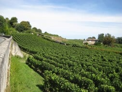 Vignoble Saint-Emilion