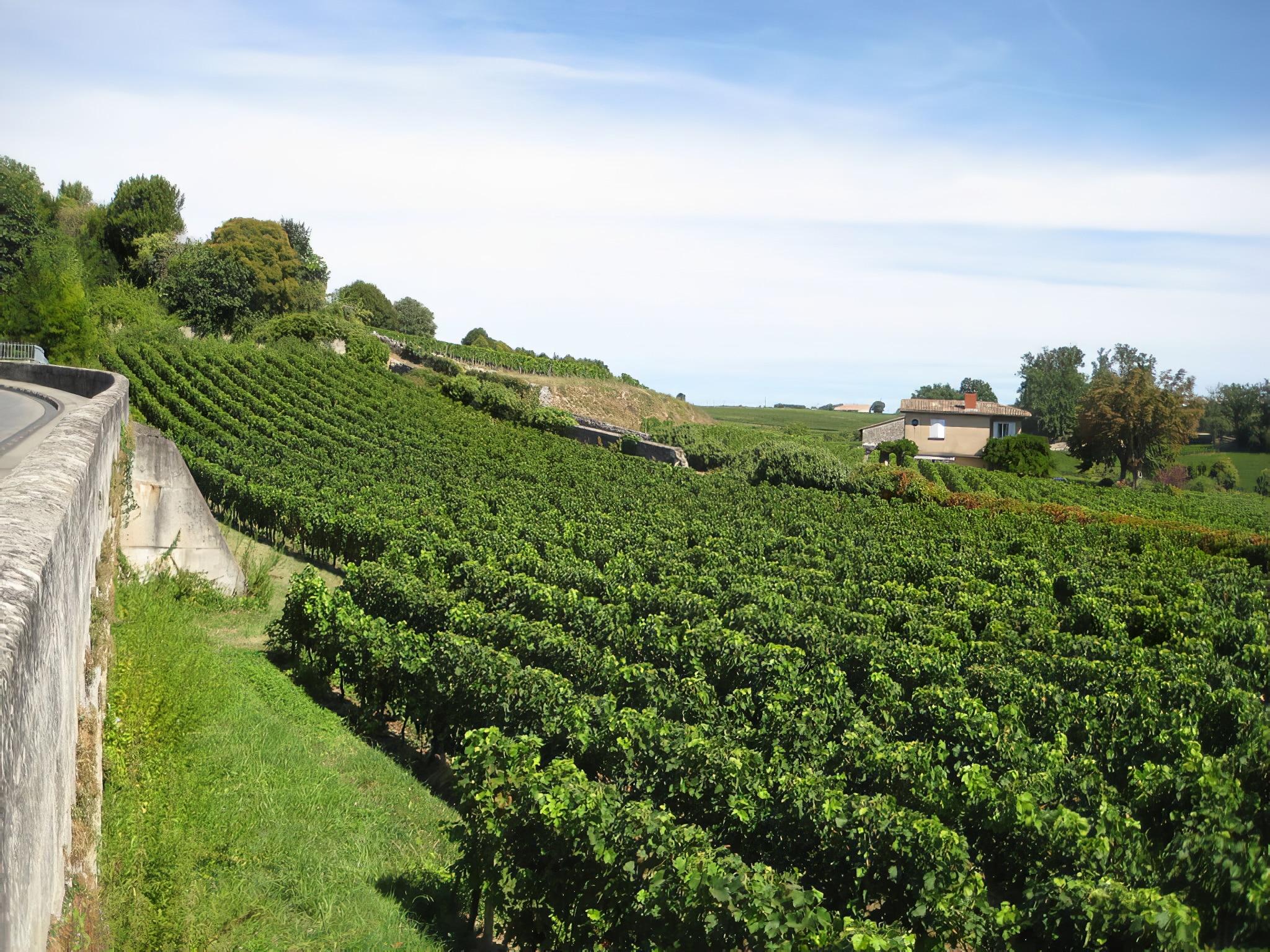 Visite guidée et dégustation au vignoble de Saint-Emilion