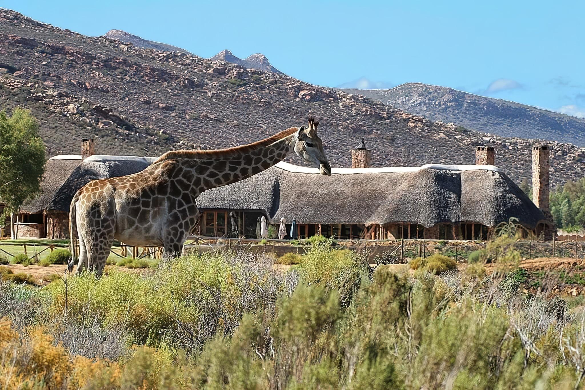 Safari dans la réserve Aquila Private Game depuis Le Cap
