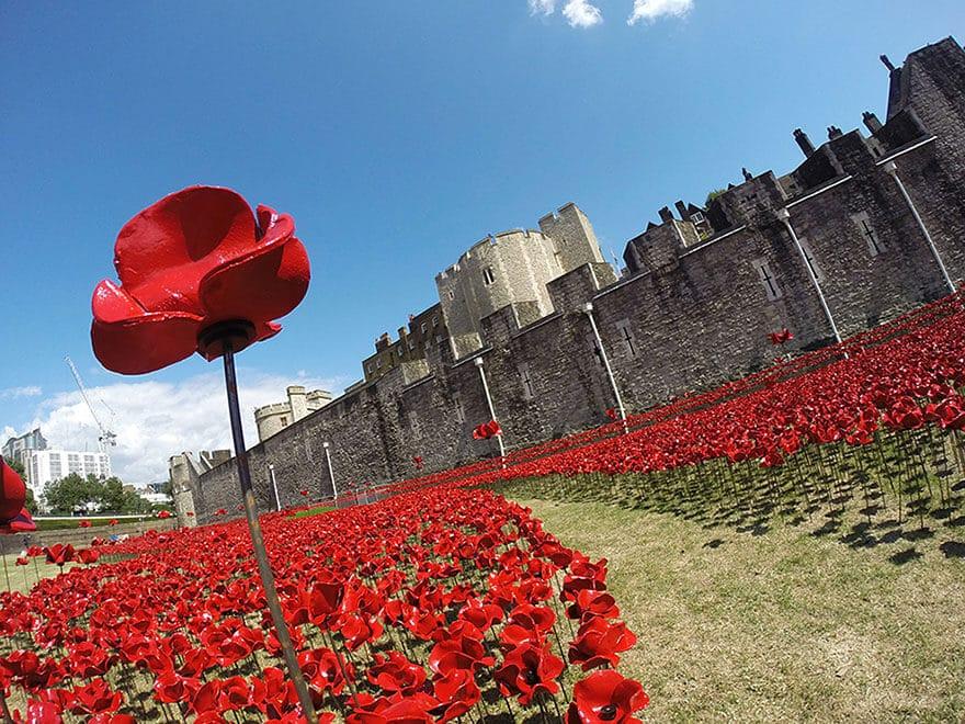 À voir cet été : les 888 246 coquelicots de la Tour de Londres