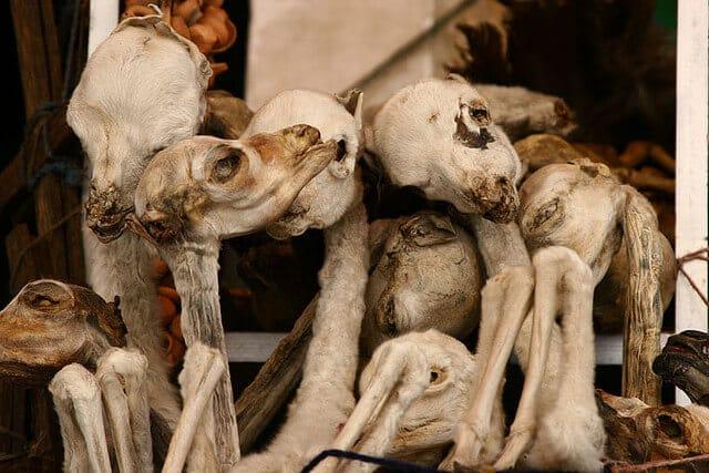 Foetus de lamas sur le marché des sorcieres de La Paz, mercado de las brujas, Bolivie