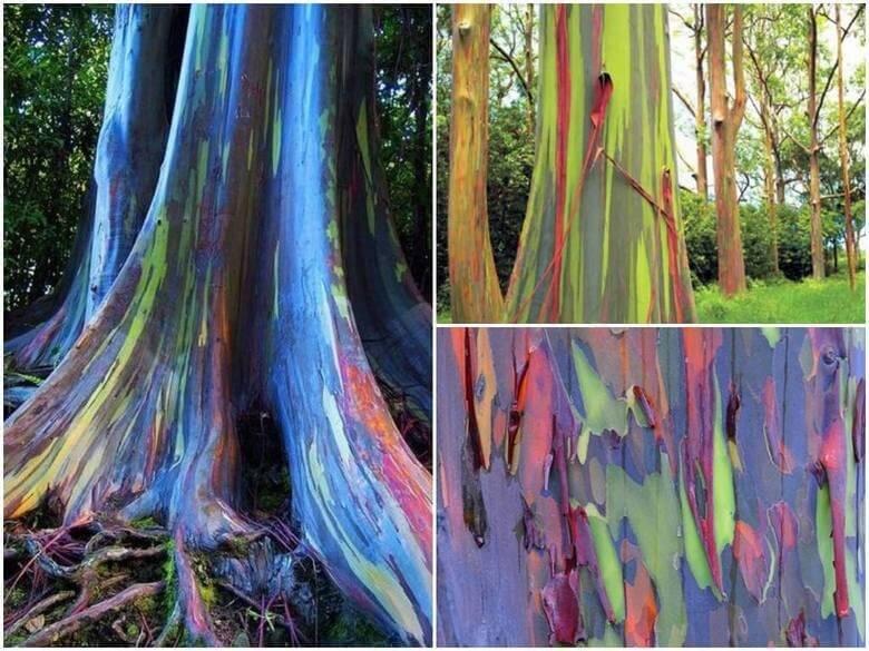 Forêts insolites Forets-insolites-arbres-etranges-monde-15