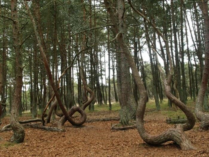 Forêts insolites Forets-insolites-arbres-etranges-monde-25