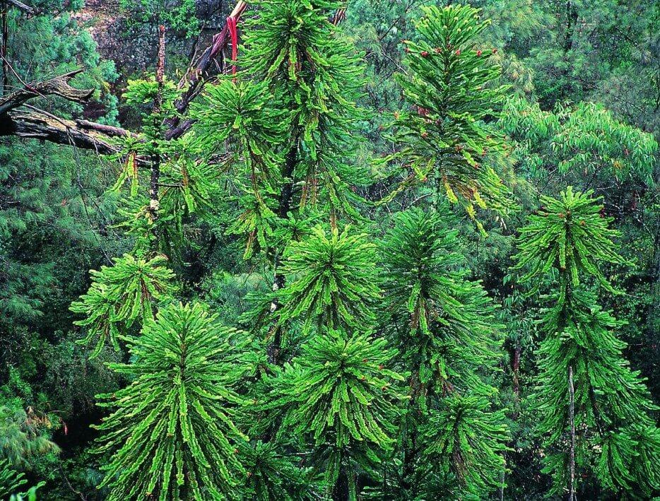 Forêts insolites, arbres étranges, dans le monde