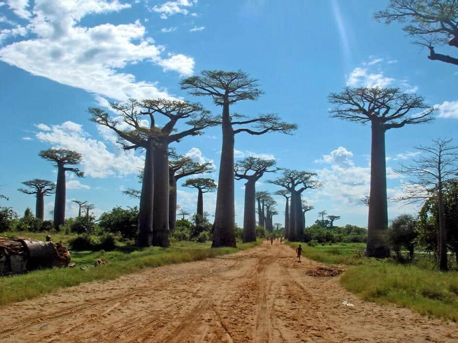 Forêts insolites Forets-insolites-arbres-etranges-monde-4
