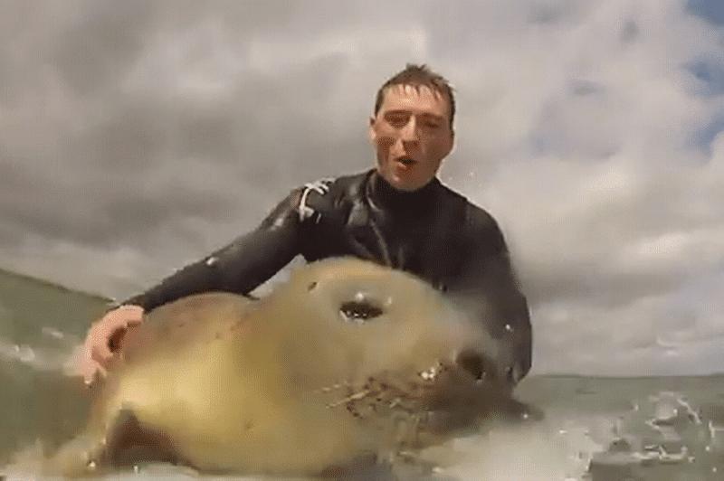 Ce bébé phoque veut absolument surfer