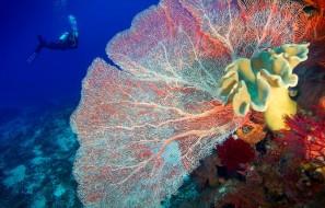 Photo récif corallien en voie de disparition