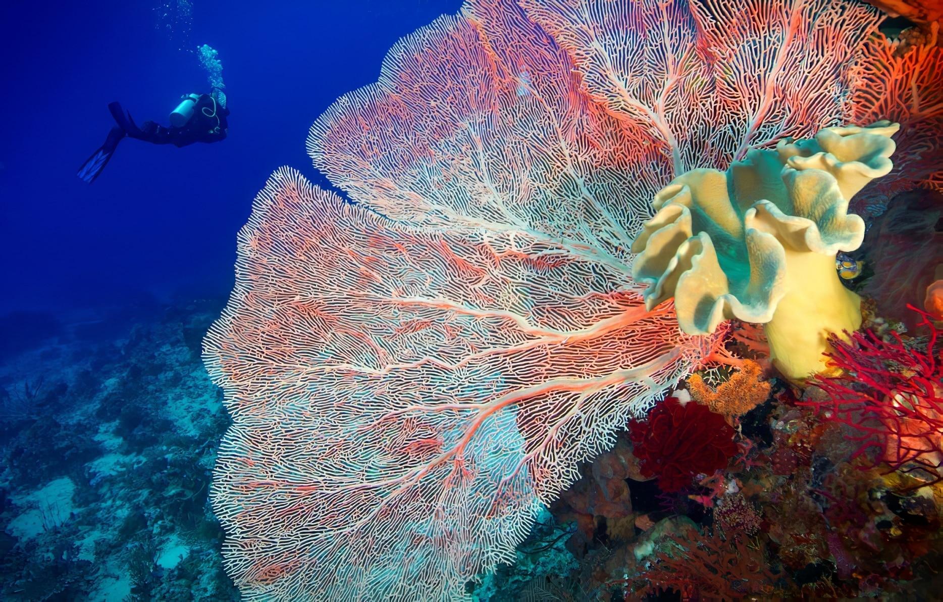 39 magnifiques photos des récifs coralliens en danger dans le monde