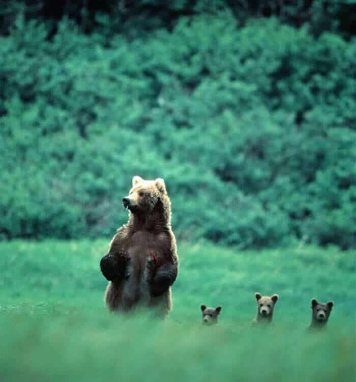 """Résultat de recherche d'images pour """"photo ours"""""""