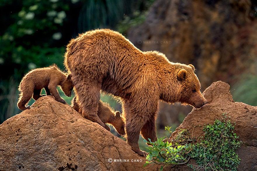 photos ours avec leurs oursons mignons