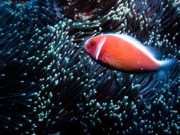 Plongée sous-marine Bali, Indonesie