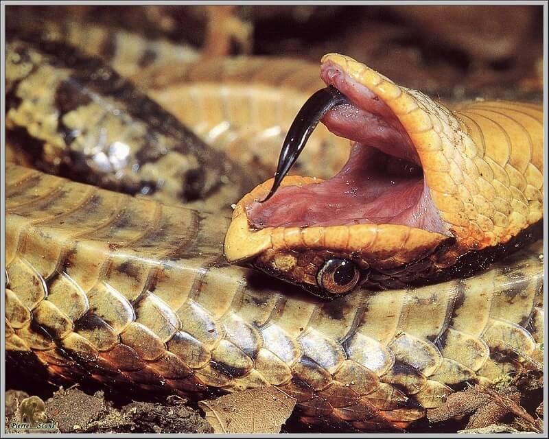 Ce serpent est un acteur génial