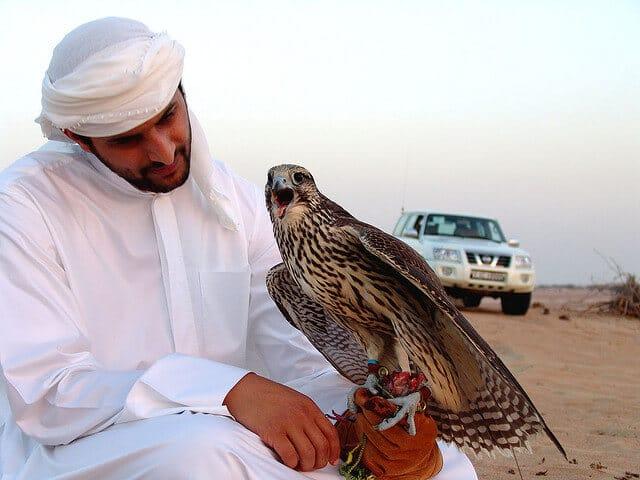 Hôpital des faucons à Abu Dhabi