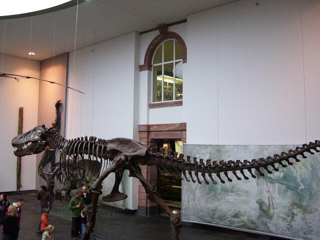 Muséum Senckenberg, Francfort