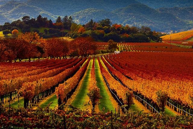 Napa Valley, Californie, San Francisco