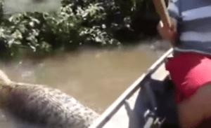 Plus gros serpent du monde, anaconda riviere Brésil