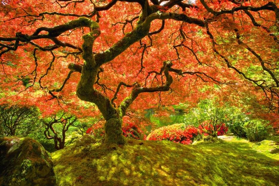 Superbes endroits pour admirer les couleurs de l'automne dans le monde