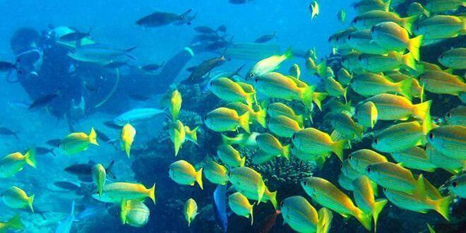 Plongée sous-marine Nosy Be