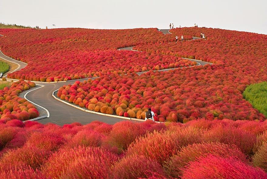 Changement de couleurs de l'été à l'automne