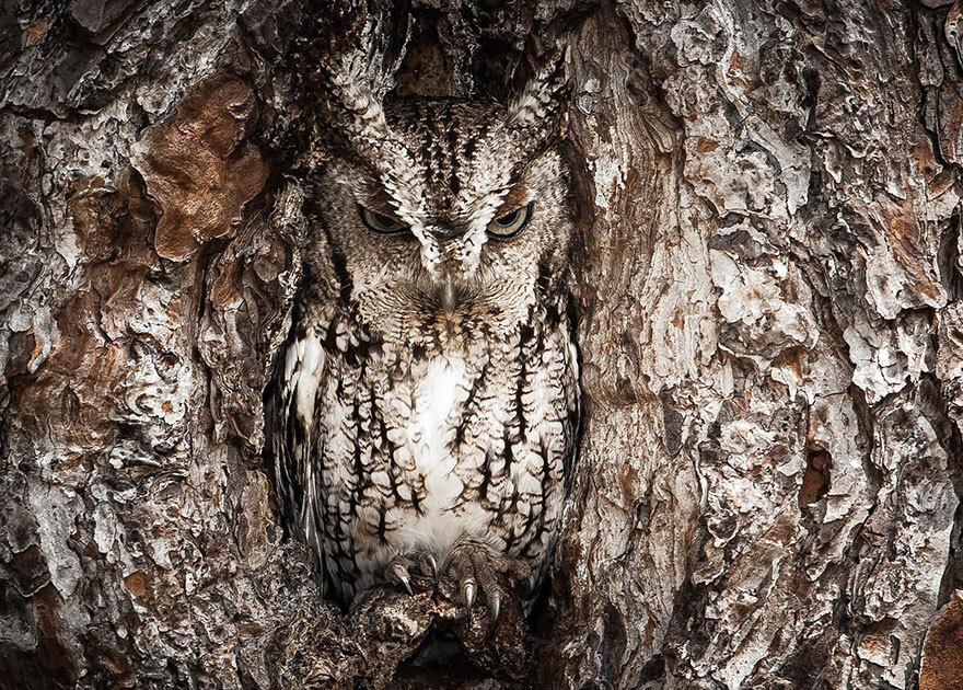 hiboux camouflage