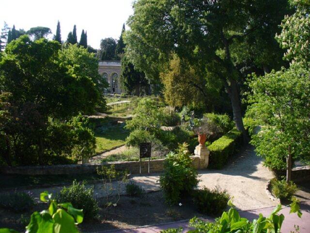 Photo jardin des plantes montpellier - Jardin des plantes de montpellier ...