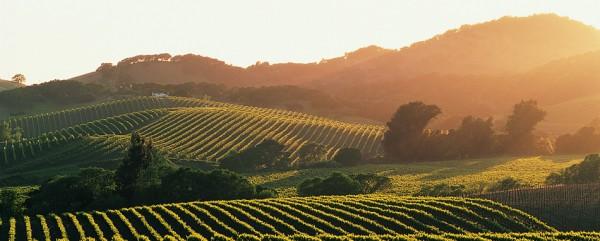 Visiter la Napa Valley et la Sonoma Valley en un jour