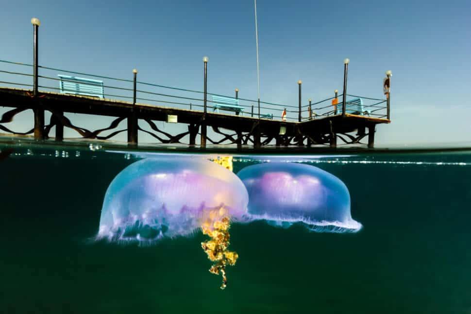foto bajo la superficie del agua, el agua Imagen genial