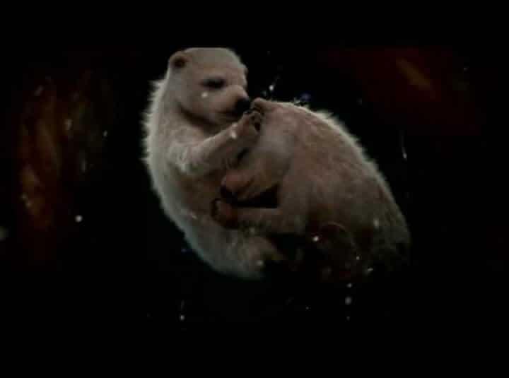 Photos de bébés animaux dans le ventre de leur mère, photos de foetus d'animaux encore dans l'uterus