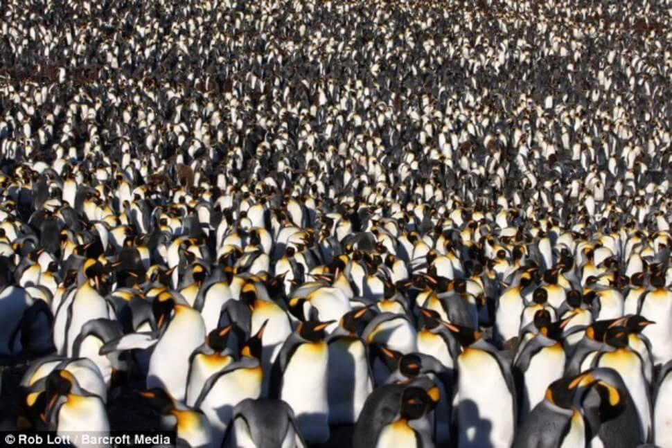 photos de groupes d'animaux sur la planète Terre qui partagent l'espace