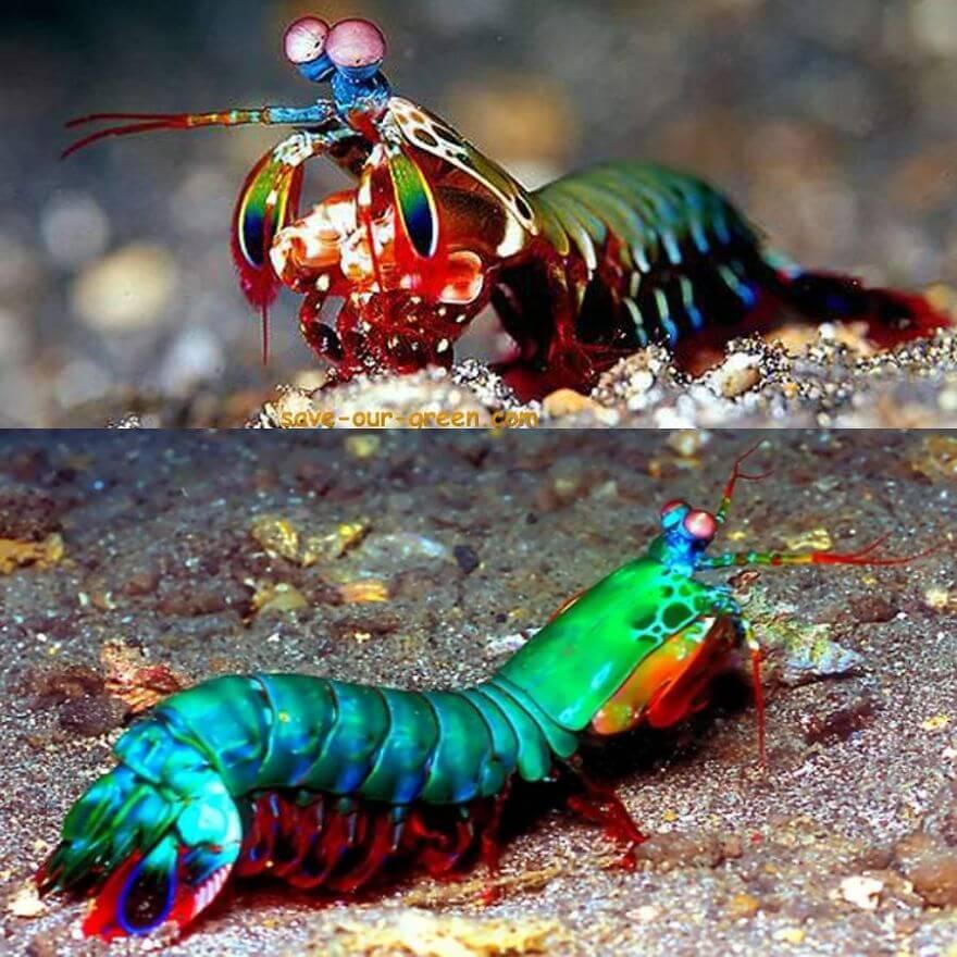Vraies couleurs insolites et étranges d'animaux