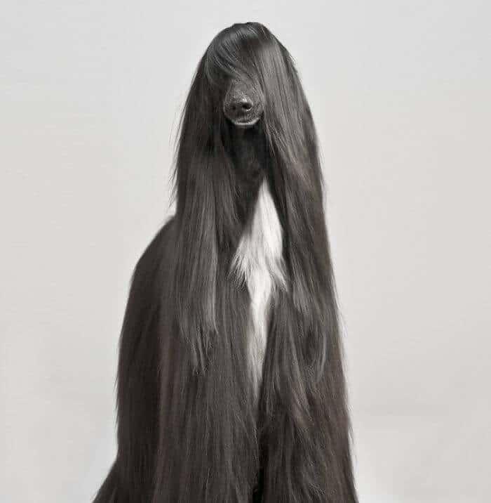 Animaux avec des poils insolites et rigolos
