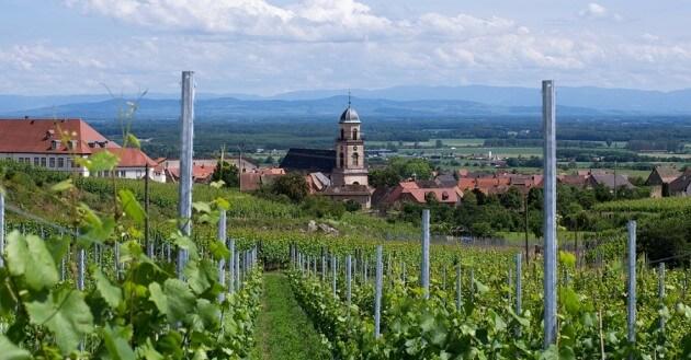 Visitez la route des vins et les vignobles Alsaciens depuis Strasbourg
