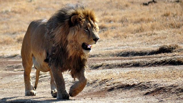Safari Afrique du Sud, destination 2015