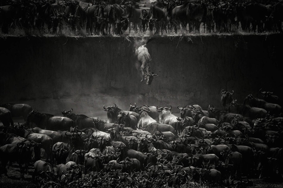 Les vainqueurs du concours de photographie National Geographic 2014