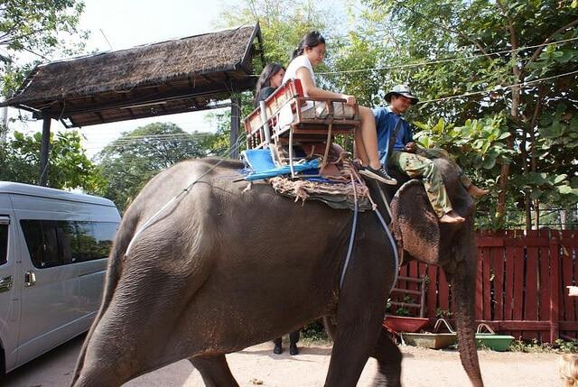 Balade éléphant Thailande torture