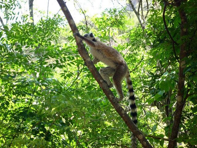 Parc National Isalo Madagascar