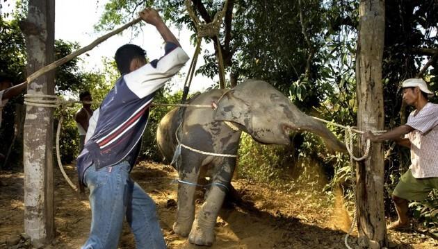 Après avoir vu ça, vous ne monterez plus jamais à dos d'éléphant
