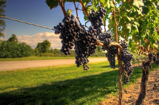 Wine Country Ontario, road trip aux Chutes du Niagara
