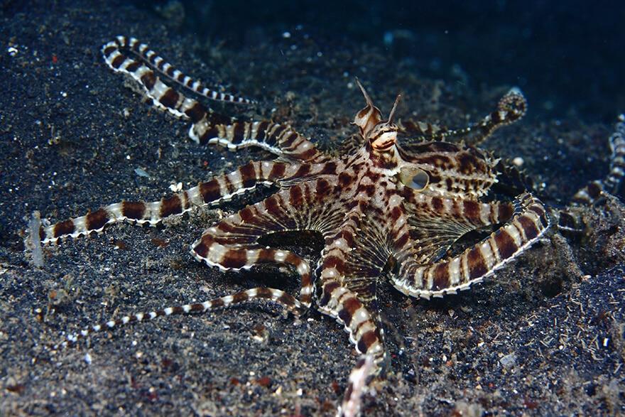 Alexis Golding, photos créatures sous-marines