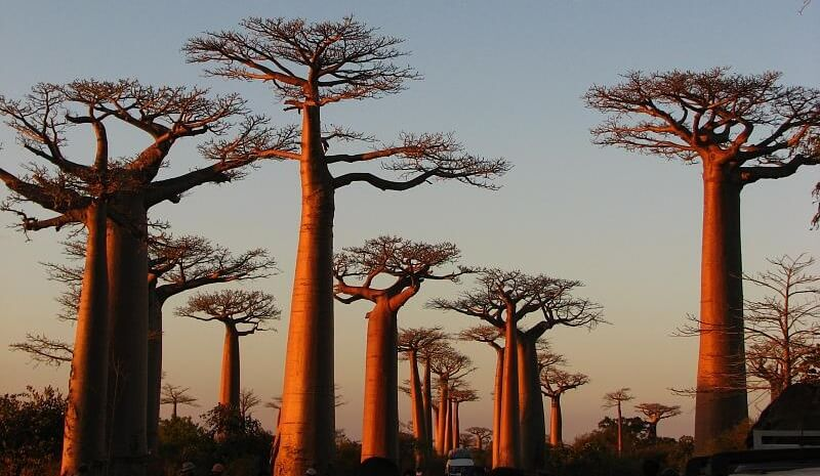 Les richesses faunistiques et floristiques de l'Est et du Sud de Madagascar