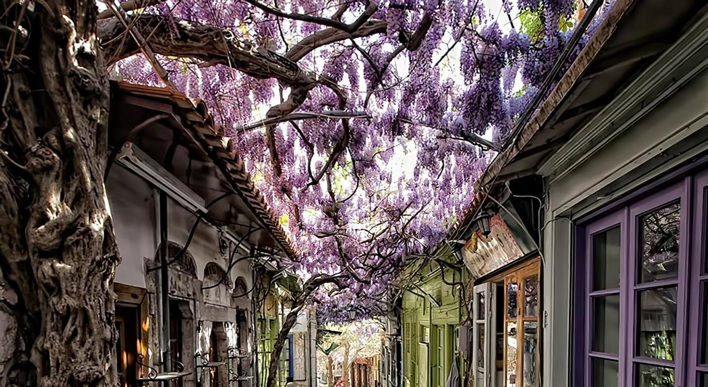 23 des plus belles rues ombragées